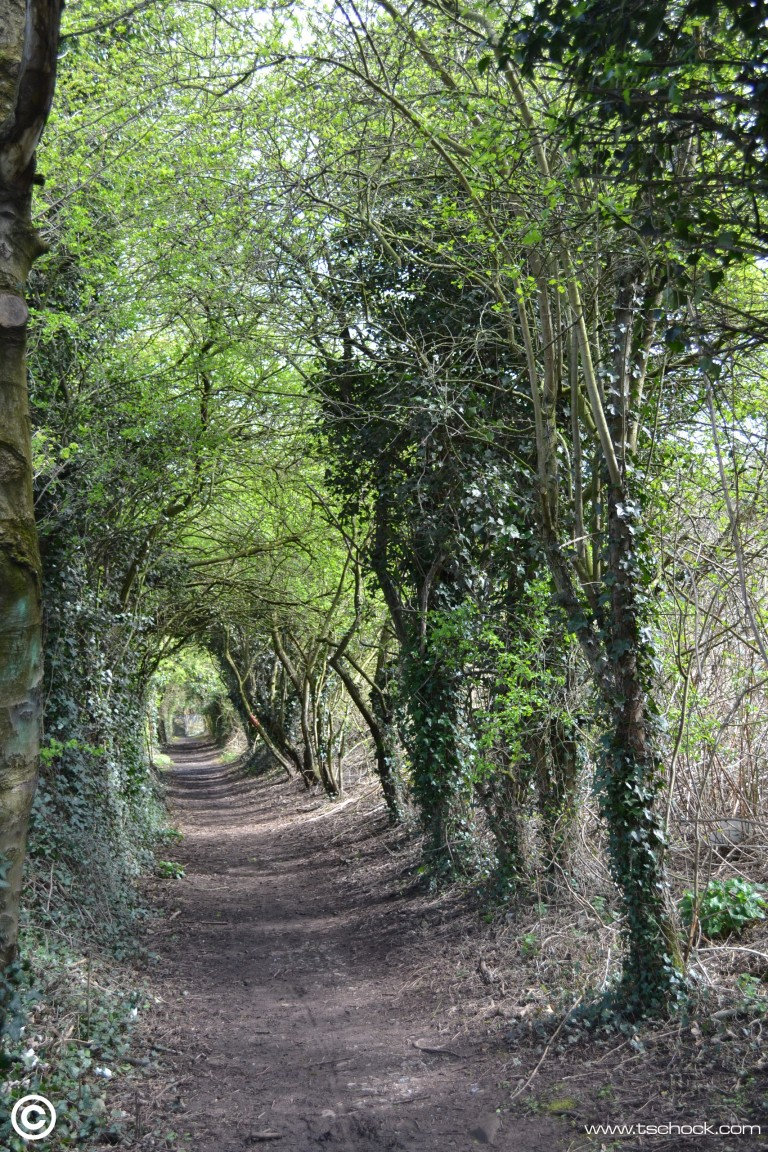 Folly Lane 4